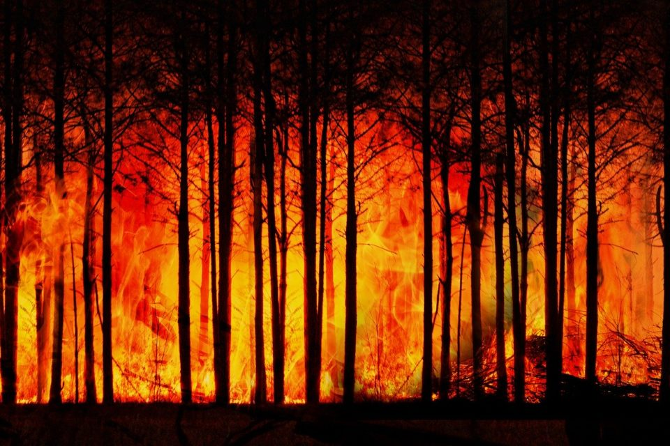 Waldbrandgefahr in Rheinland-Pfalz