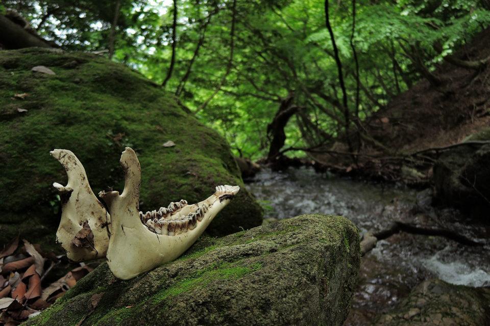 Jagdprüfung Wildbestimmung
