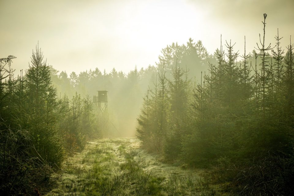 Hochsitz im Wald