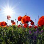 Mit Wildpflanzen gegen Trockenheit